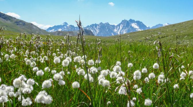 Bivio – Juf – Pass Lunghin – Piz Lunghin (2780 m) – Maloja in 2 Tagen