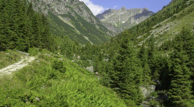 Arni-Alp UR 2|2: Leutschachtal – Alp Furt 1760 m