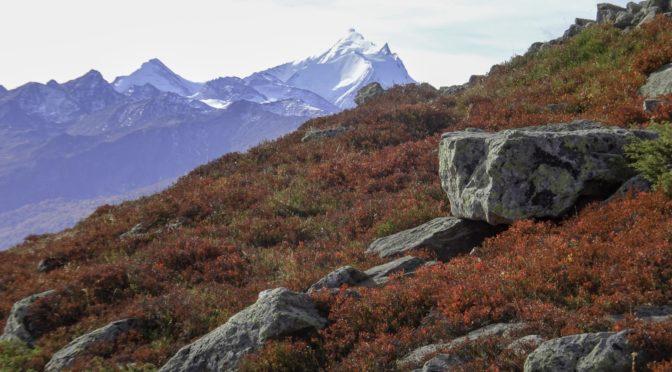 Lötschepass 2689 m – Rundwanderung ab Lauchernalp 1969 m