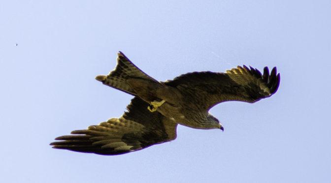 Nationalpark Monfragüe – Flugschau in der Extremadura