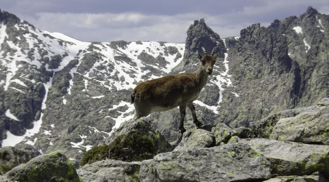 Auf den Morezón (2389 m) – Sierra de Gredos