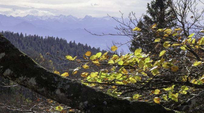 Geoweg Chrüzegg – Tweralpspitz – Atzmännig, herbstliche Grat-Runde im Nagelfluhland